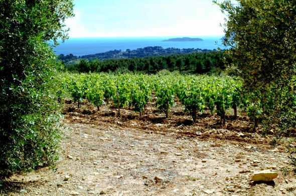 Vignoble du Moulin de la Roque