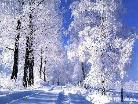 589-foret-sous-la-neige-wallfizz