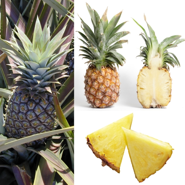 Owoce_Ananas